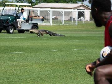 Un cocodrilo se cuela el campo del Toronto FC ante la atenta mirada de los jugadores