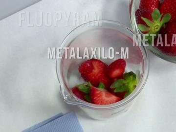 Pesticidas en unas fresas
