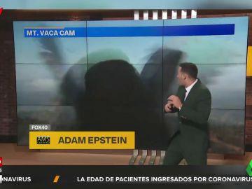El tremendo susto de un presentador al irrumpir ante la cámara un pájaro de grandes dimensiones