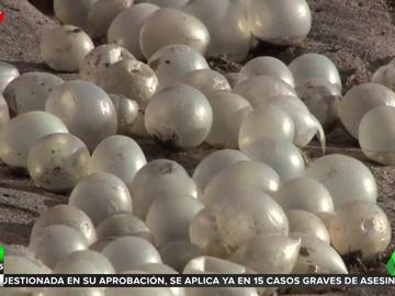Resuelto el misterio de las 'perlas' que inundaron las playas del Mar de Plata