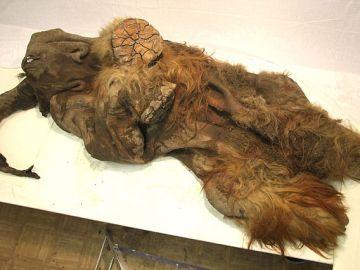 Los restos del mamut 'Yuka'