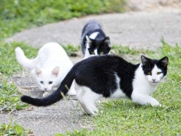 Imagen de archivo de gatos callejeros