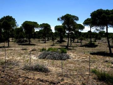 Interior del Parque de Doñana