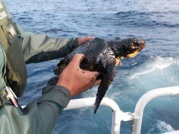 Una patrullera de la Guardia Civil rescata a una tortuga contaminada