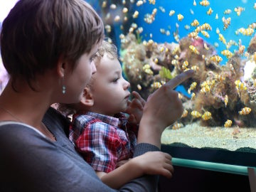 Una madre y su hijo en un acuario
