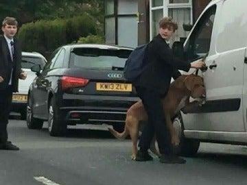 El joven descolgando al perro