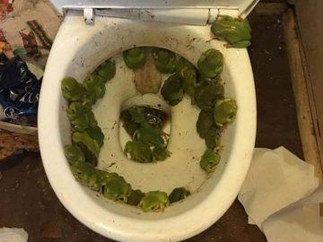 Imagen de la plaga de ranas en su baño que compartió en redes sociales