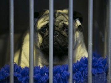 Un perro en una jaula