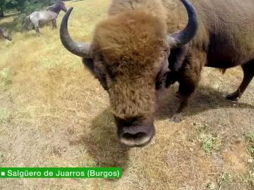 Animal de safari prehistórico
