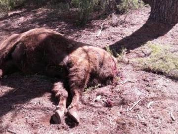Imagen del bisonte decapitado en Benagéber