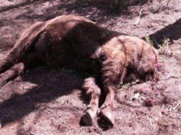 El primer bisonte decapitado en la Reserva de Valdeserrillas