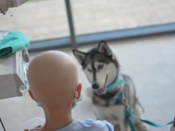 Imagen de un perro con un paciente menor en un hospital