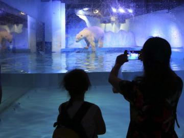 """Ciudadanos chinos fotografían a Pizza, el """"oso polar más triste del mundo"""""""