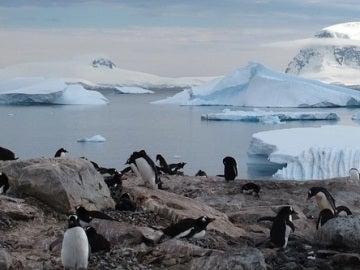 La Antártida acogerá la mayor área marína protegida del mundo