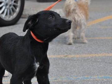 Un perro en la calle