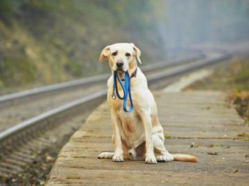 Un perro espera al lado de una vía de tren