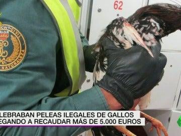Frame 13.946398 de: PELEAS DE GALLOS