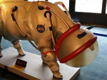 El traje de vaca anunciado por la NASA en el April Fool's Day