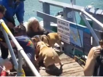 La agresión de los perros al hombre