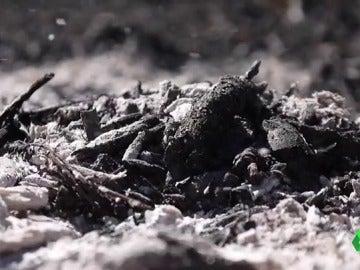 Frame 10.038896 de: El proyecto 'Ashes to life' pretende fabricar jabones ecológicos con las cenizas de los bosques quemados