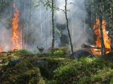 SEO/BirdLife alerta de las consecuencias medioambientales provocadas por los incendios en la cornisa cantábrica