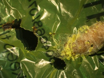 La oruga comeplastico que ayudara a salvar el medioambiente