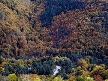 Vista de la Selva de Irati (Pamplona)