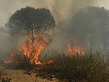 Imagen del grave incendio en Doñana (Archivo)