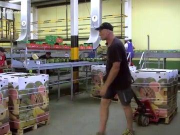 La marca Palomares, un lastre para los agricultores: muchos optaron por quitar la etiqueta a sus productos