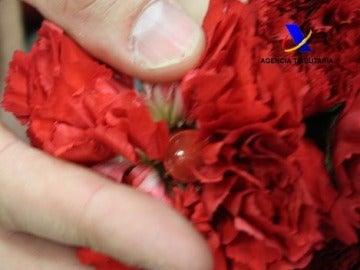 Cápsulas escondidas en los pétalos de los claveles