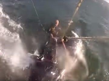 Una ballena golpea a un kitesurfista