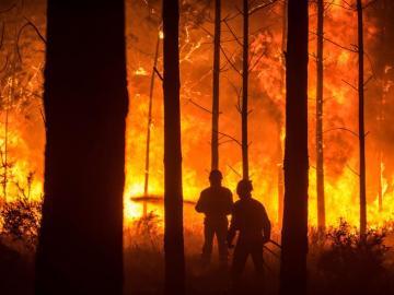 Un hombre lucha contra las llamas en un incendio forestal