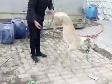 Un hombre mata a su perro tras golpearle de forma salvaje varias veces por perder una carrera