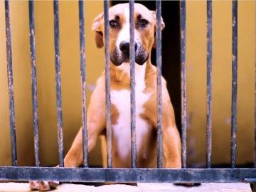 Imagen de un perro llorando en su jaula en el vídeo viral 'No compres, adopta'