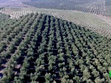 """Noguerales, pueblo de Jaén y base del emporio del aceite de oliva de Enrique Fuentes: """"Él no era trigo limpio"""""""