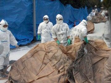 Varios inspectores sanitarios que se disponen a sacrificar pollos en una granja de Japón