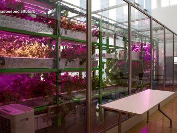 La agricultura del futuro, en Enviado especial
