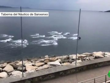 Una manada de delfines surca las aguas de la Ría de Pontevedra