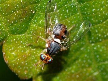 Imagen de archivo de una mosca