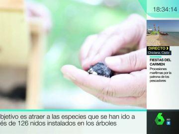Hogar para los pájaros en Madrid