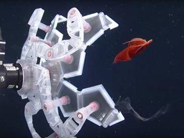 Se inspiran en el origami para capturar sin daño frágiles seres marinos
