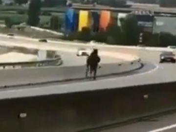 Caballo desbocado en una autovía de Barcelona