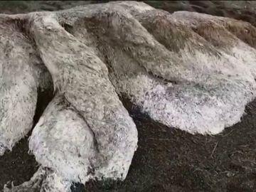 Aparece una extraña criatura peluda de ocho metros en una playa de Rusia