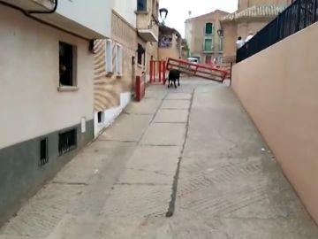 Un toro cornea a una mujer tras romper el vallado de un encierro en Milagro, Navarra