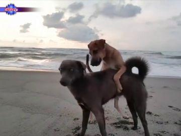 """Dos perros """"exhibicionistas"""" convierten el vídeo de dos chicas en la playa """"en una película porno"""""""