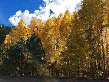 Imagen de archivo de árboles