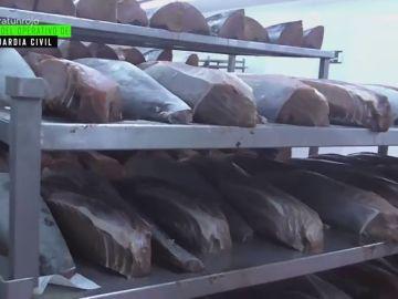 """""""El 50% de lo que distribuye es ilegal"""": la cruda realidad que rodea a uno de los mayores productores 'legales' de atún rojo a nivel mundial"""