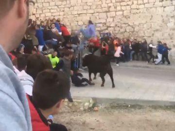 Un toro embiste a un hombre en Ontinyent