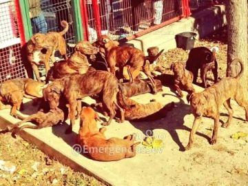 Los 18 perros en el parque infantil