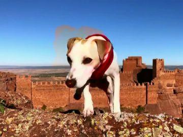 Pipper, primer perro turista en dar la vuelta a España